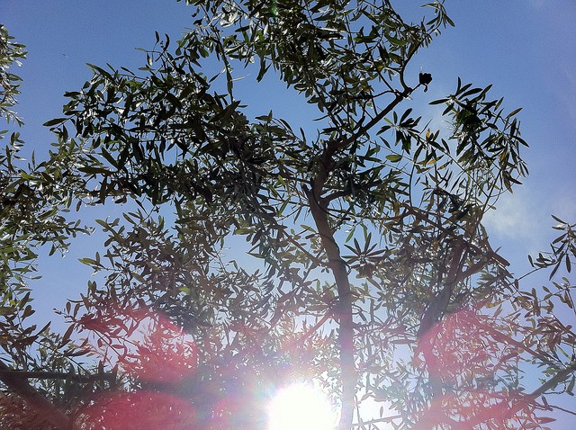 Looking up at the sunlight through the tree in the garden...